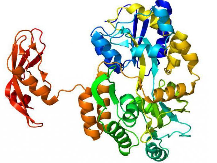 Enzymy podstawą życia i dobrego samopoczucia